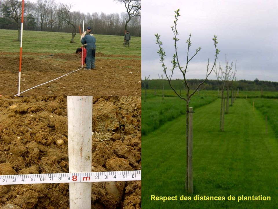 Respect des distances de plantation