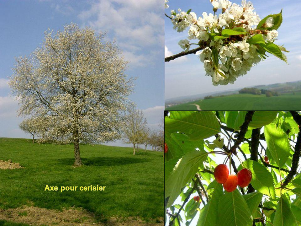 Axe pour cerisier