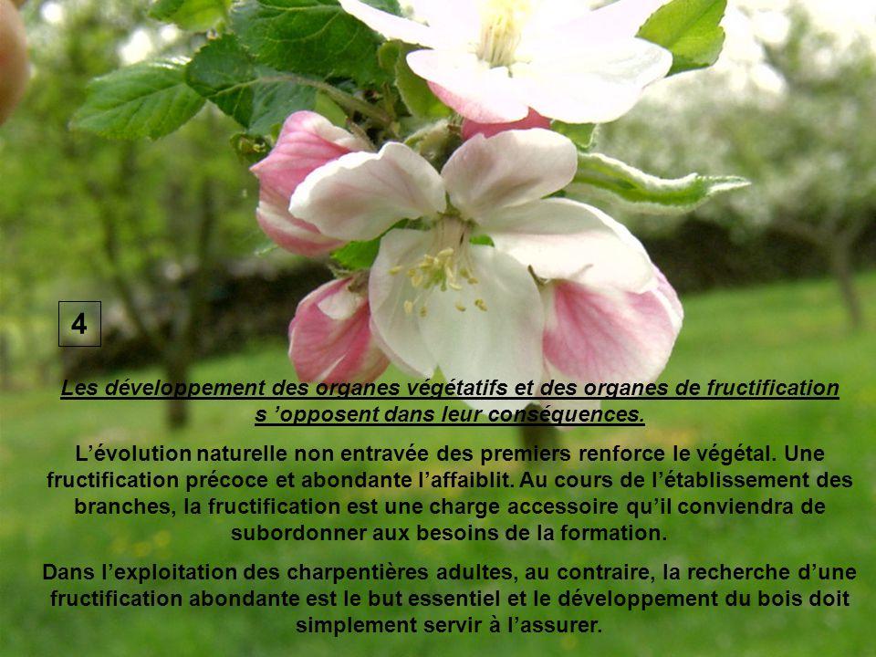 4 Les développement des organes végétatifs et des organes de fructification s 'opposent dans leur conséquences.