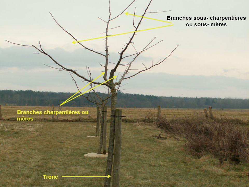 Branches sous- charpentières ou sous- mères