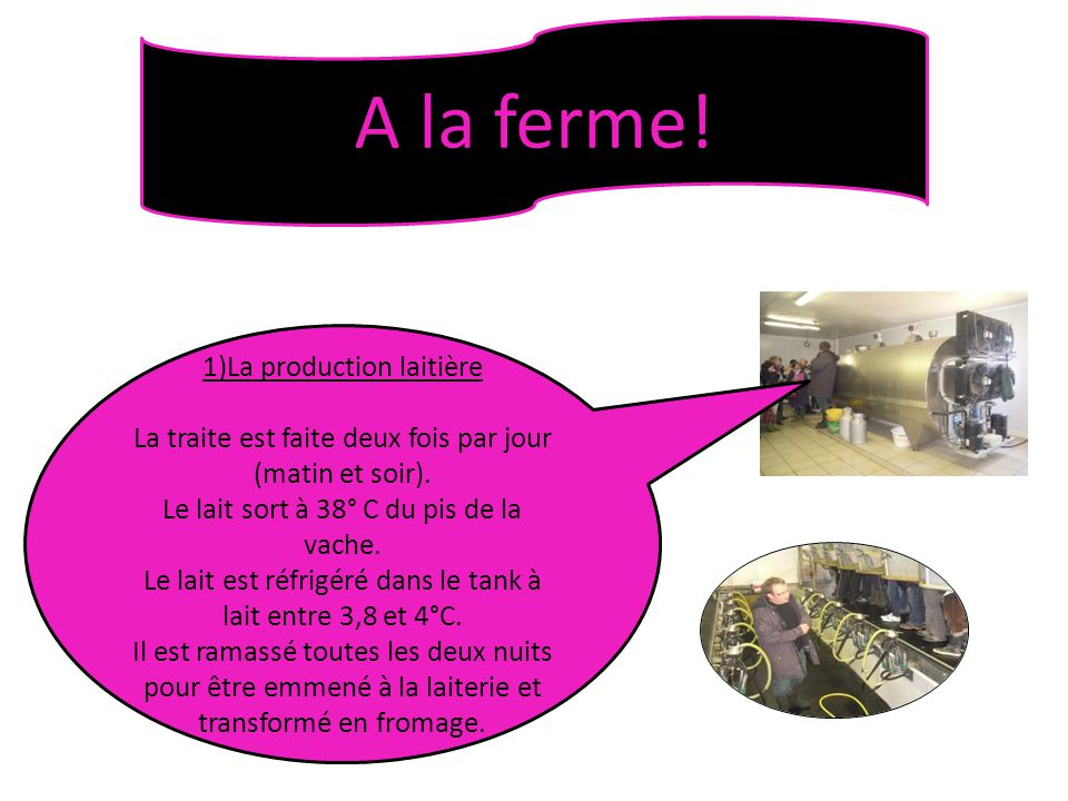 A la ferme! 1)La production laitière