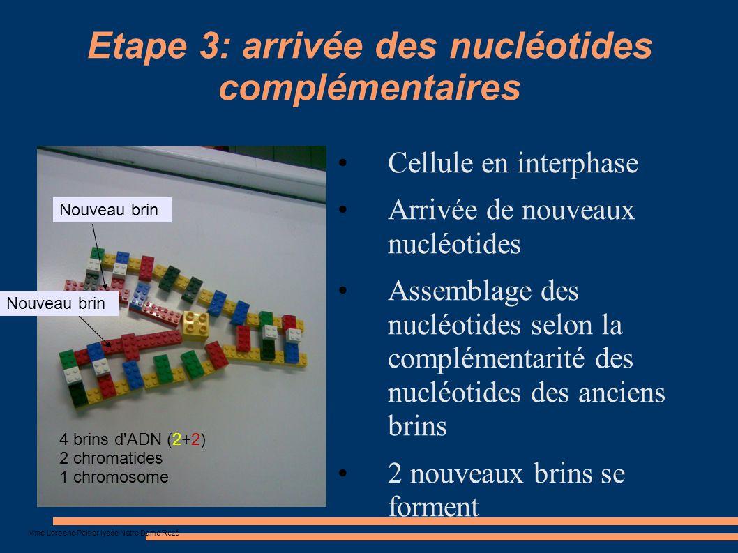 Etape 3: arrivée des nucléotides complémentaires