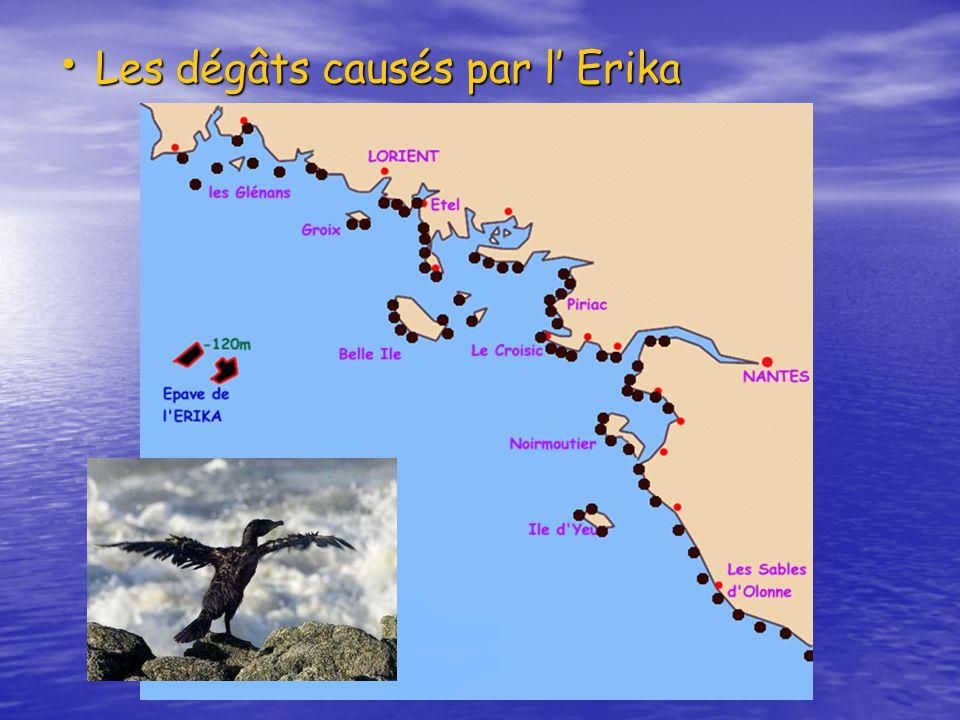 Les dégâts causés par l' Erika
