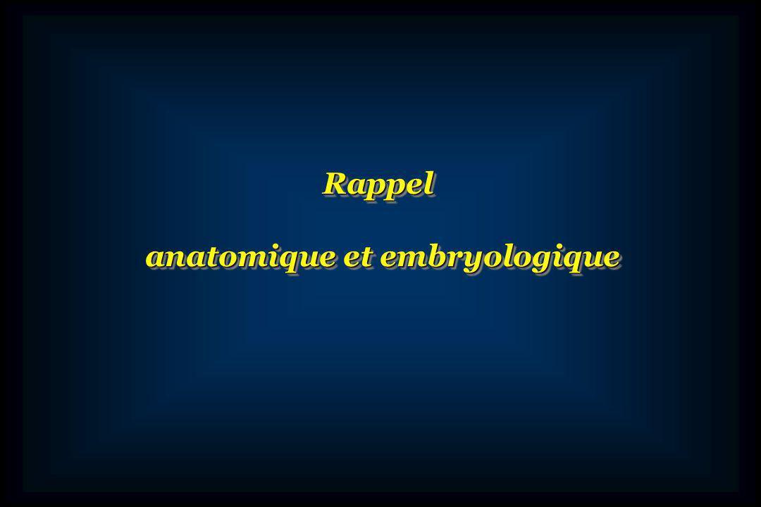 anatomique et embryologique