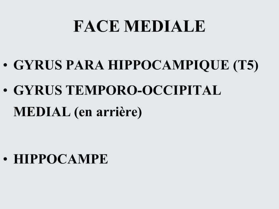 FACE MEDIALE GYRUS PARA HIPPOCAMPIQUE (T5)