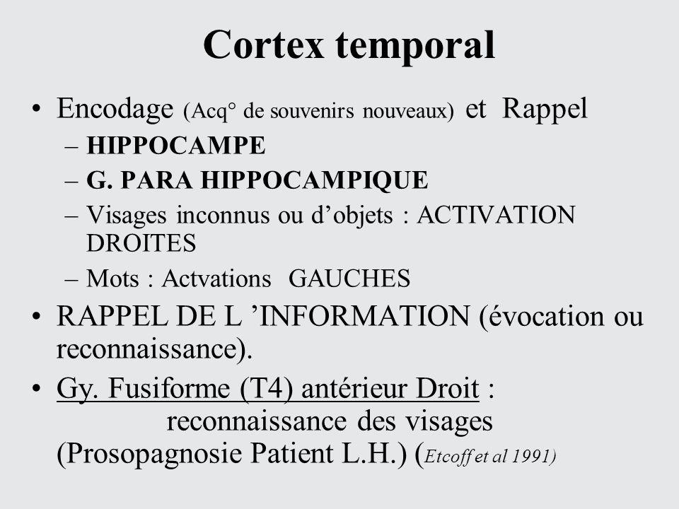 Cortex temporal Encodage (Acq° de souvenirs nouveaux) et Rappel