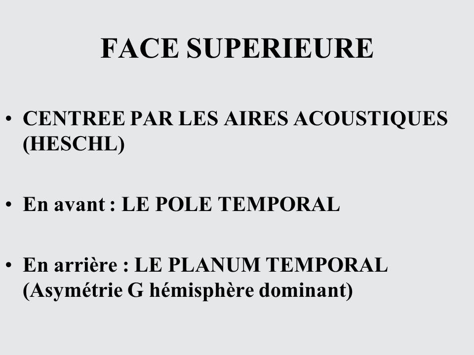 FACE SUPERIEURE CENTREE PAR LES AIRES ACOUSTIQUES (HESCHL)