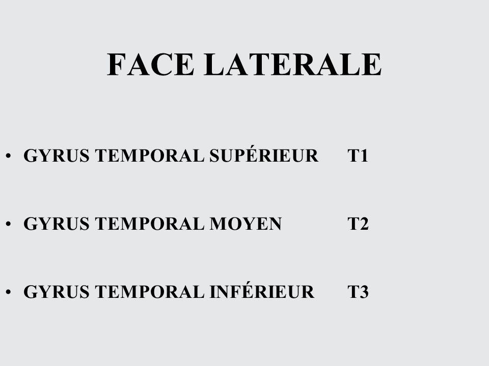 FACE LATERALE GYRUS TEMPORAL SUPÉRIEUR T1 GYRUS TEMPORAL MOYEN T2