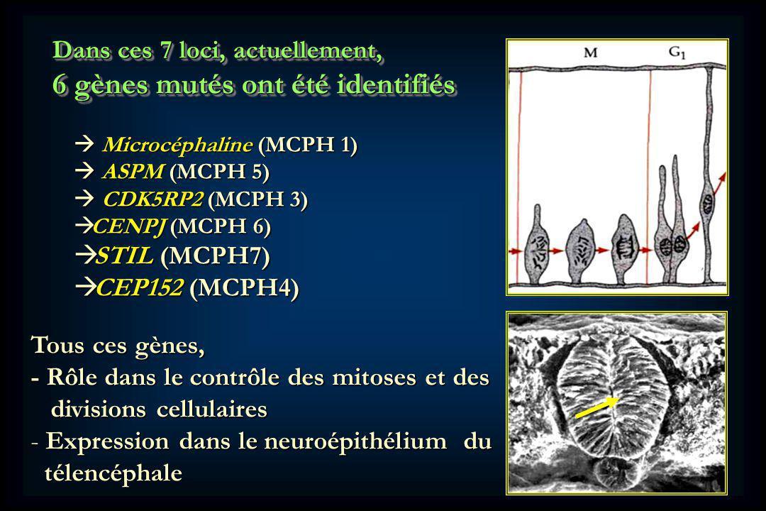 6 gènes mutés ont été identifiés
