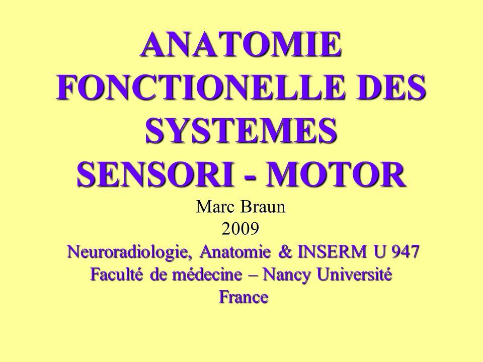 ANATOMIE FONCTIONELLE DES SYSTEMES SENSORI - MOTOR Marc Braun 2009 Neuroradiologie, Anatomie & INSERM U 947 Faculté de médecine – Nancy Université France