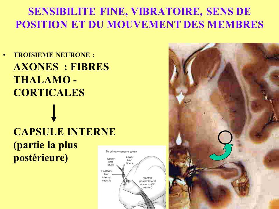 SENSIBILITE FINE, VIBRATOIRE, SENS DE POSITION ET DU MOUVEMENT DES MEMBRES
