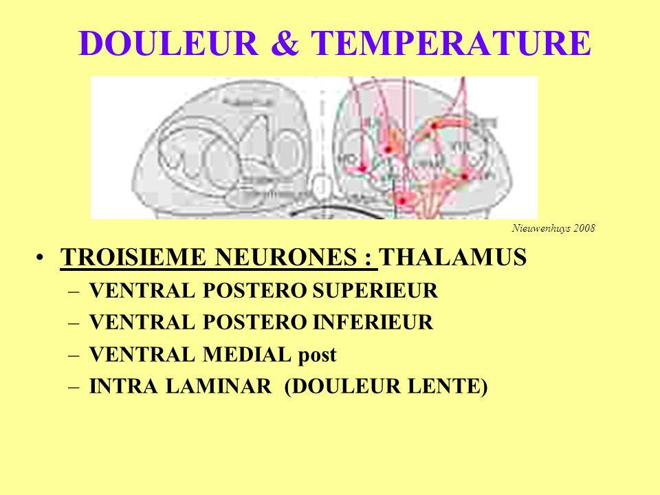 DOULEUR & TEMPERATURE TROISIEME NEURONES : THALAMUS