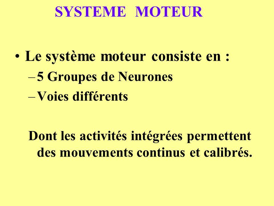 Le système moteur consiste en :