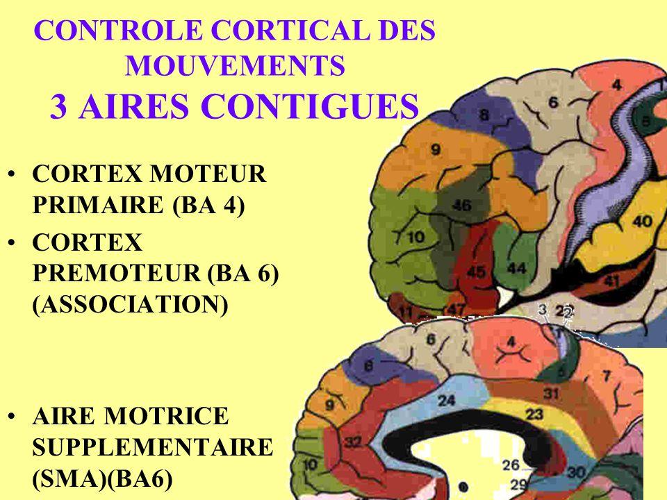 CONTROLE CORTICAL DES MOUVEMENTS 3 AIRES CONTIGUES