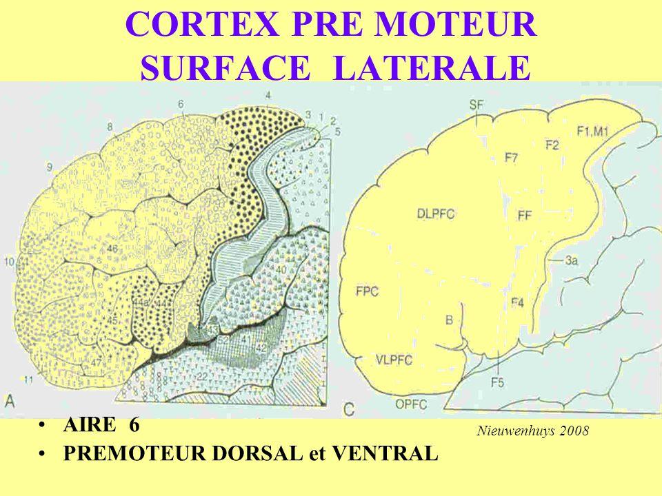 CORTEX PRE MOTEUR SURFACE LATERALE