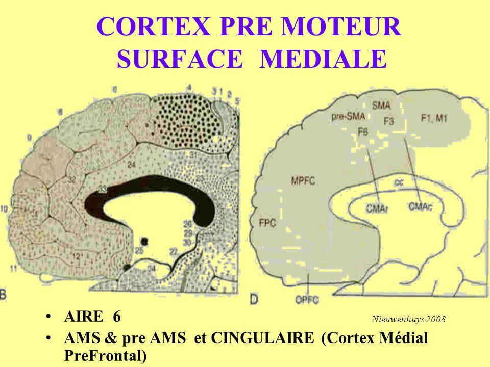 CORTEX PRE MOTEUR SURFACE MEDIALE