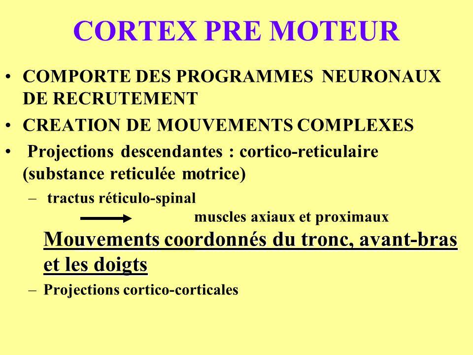 CORTEX PRE MOTEUR COMPORTE DES PROGRAMMES NEURONAUX DE RECRUTEMENT
