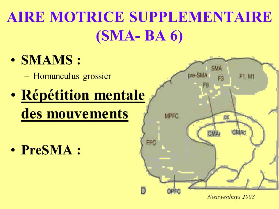 AIRE MOTRICE SUPPLEMENTAIRE (SMA- BA 6)