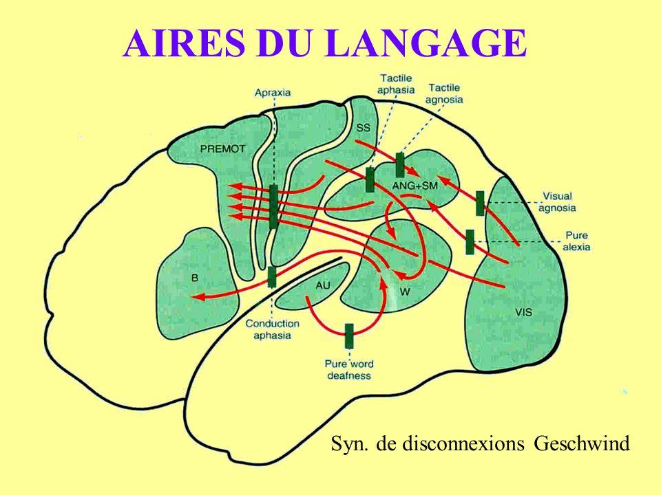 AIRES DU LANGAGE Syn. de disconnexions Geschwind