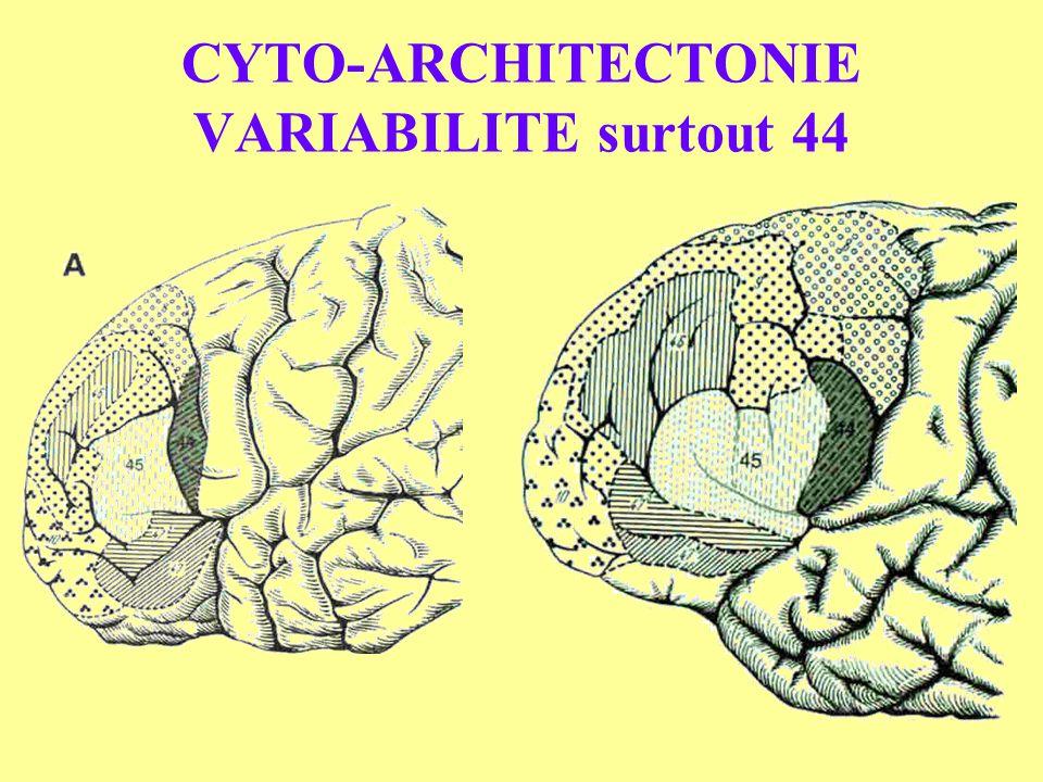 CYTO-ARCHITECTONIE VARIABILITE surtout 44