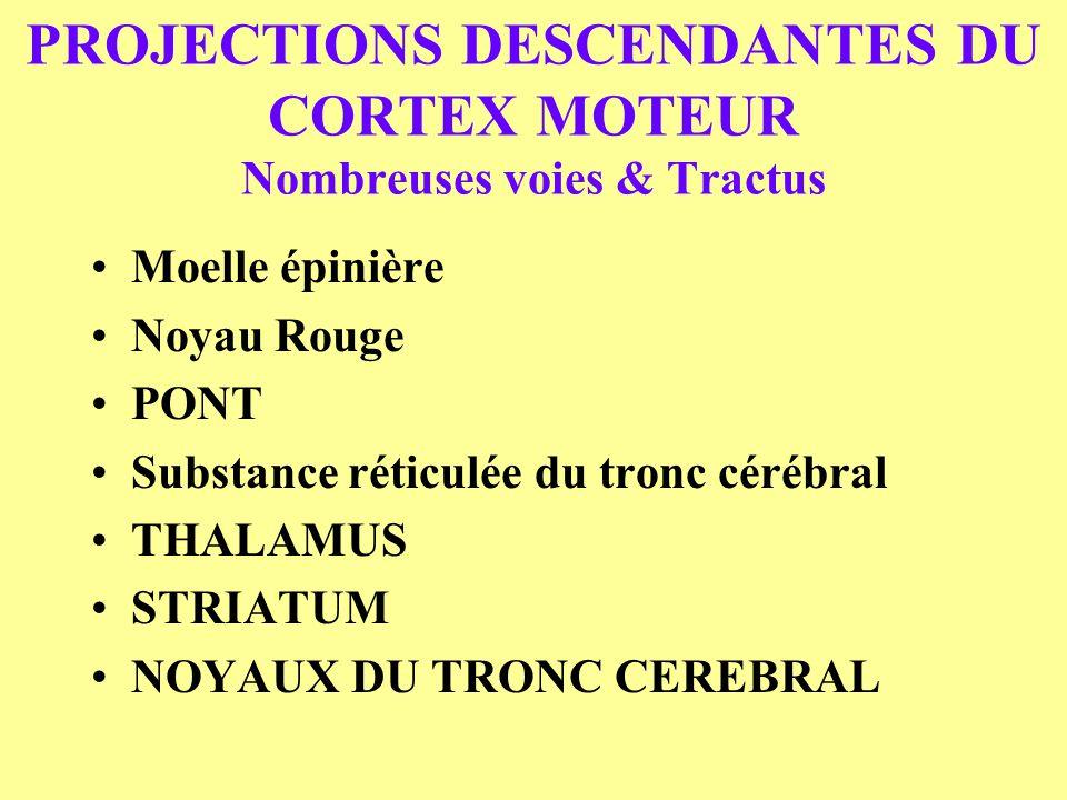 PROJECTIONS DESCENDANTES DU CORTEX MOTEUR Nombreuses voies & Tractus
