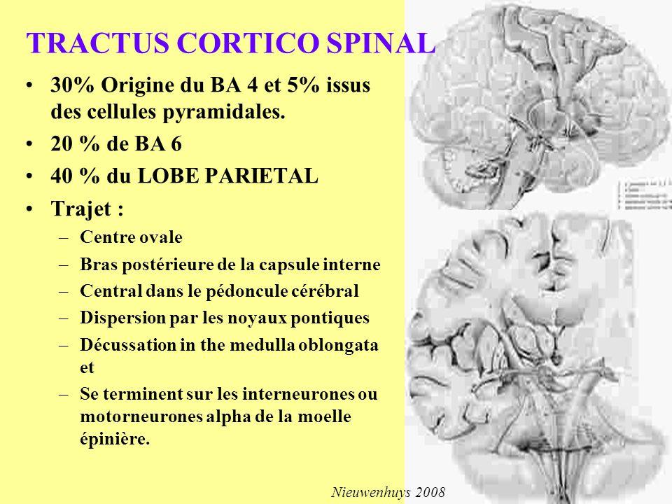 TRACTUS CORTICO SPINAL