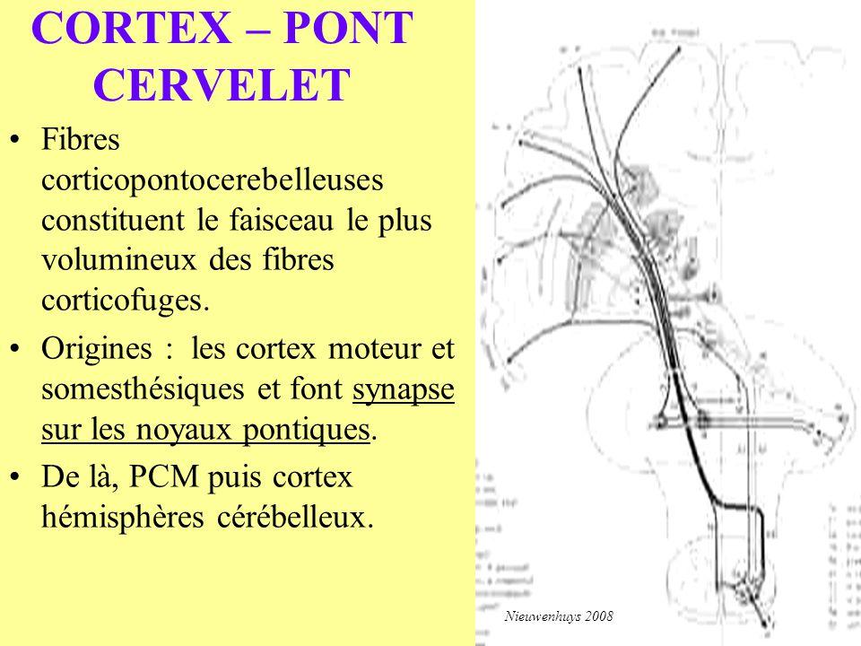 CORTEX – PONT CERVELET Fibres corticopontocerebelleuses constituent le faisceau le plus volumineux des fibres corticofuges.