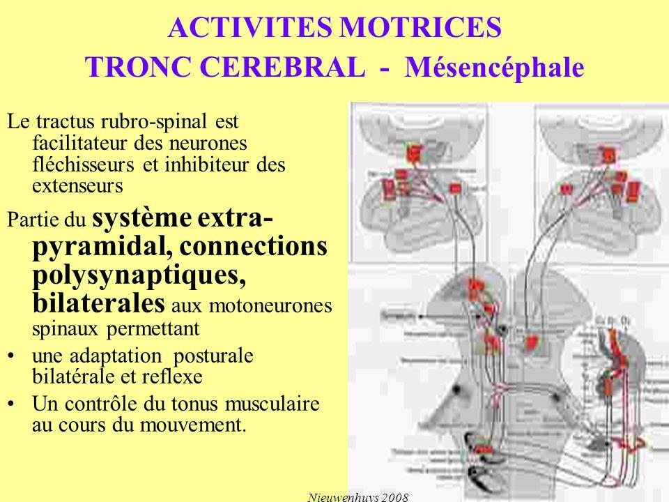 ACTIVITES MOTRICES TRONC CEREBRAL - Mésencéphale