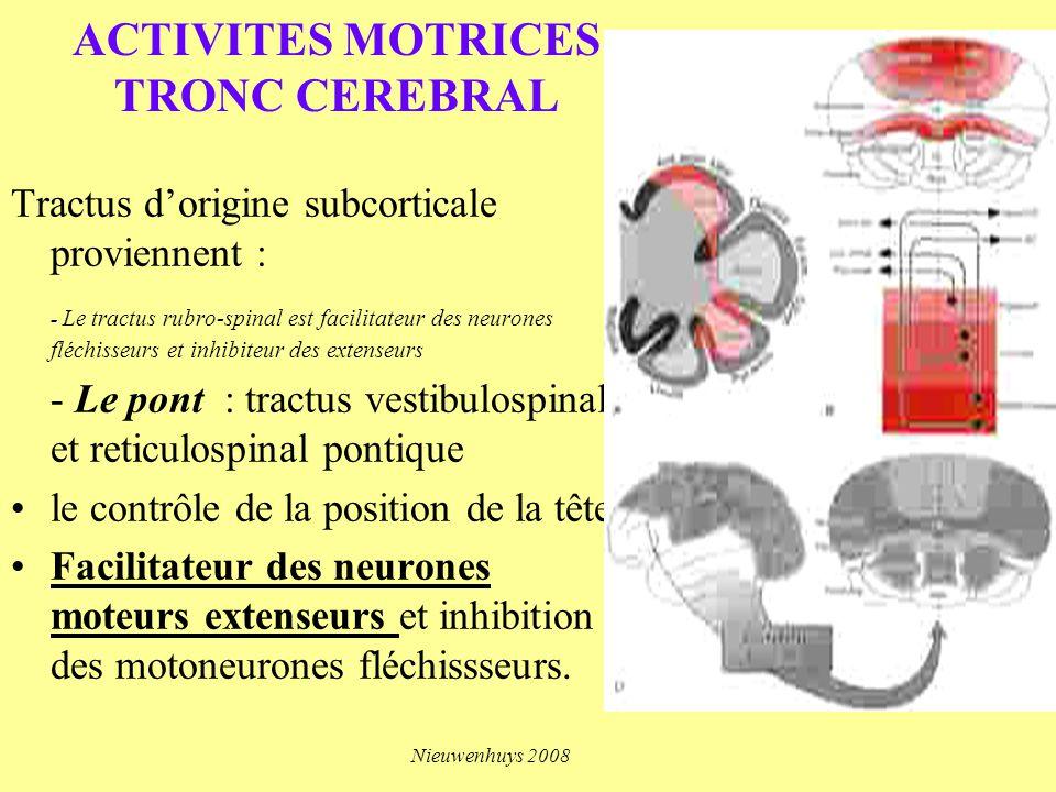ACTIVITES MOTRICES TRONC CEREBRAL