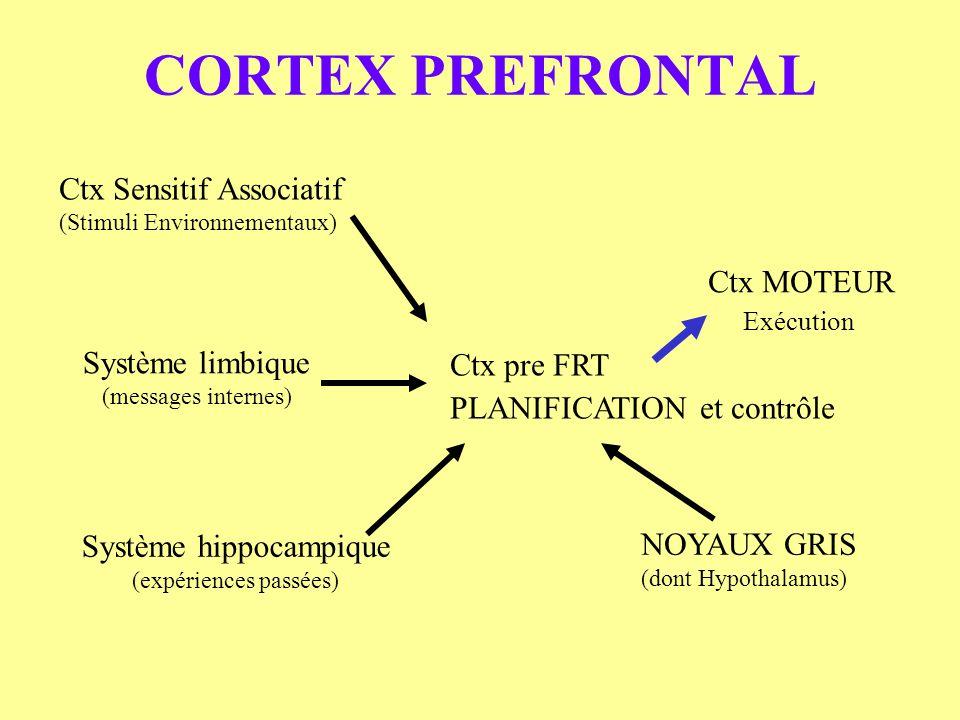 CORTEX PREFRONTAL Ctx Sensitif Associatif Ctx MOTEUR Système limbique