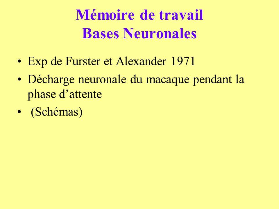 Mémoire de travail Bases Neuronales