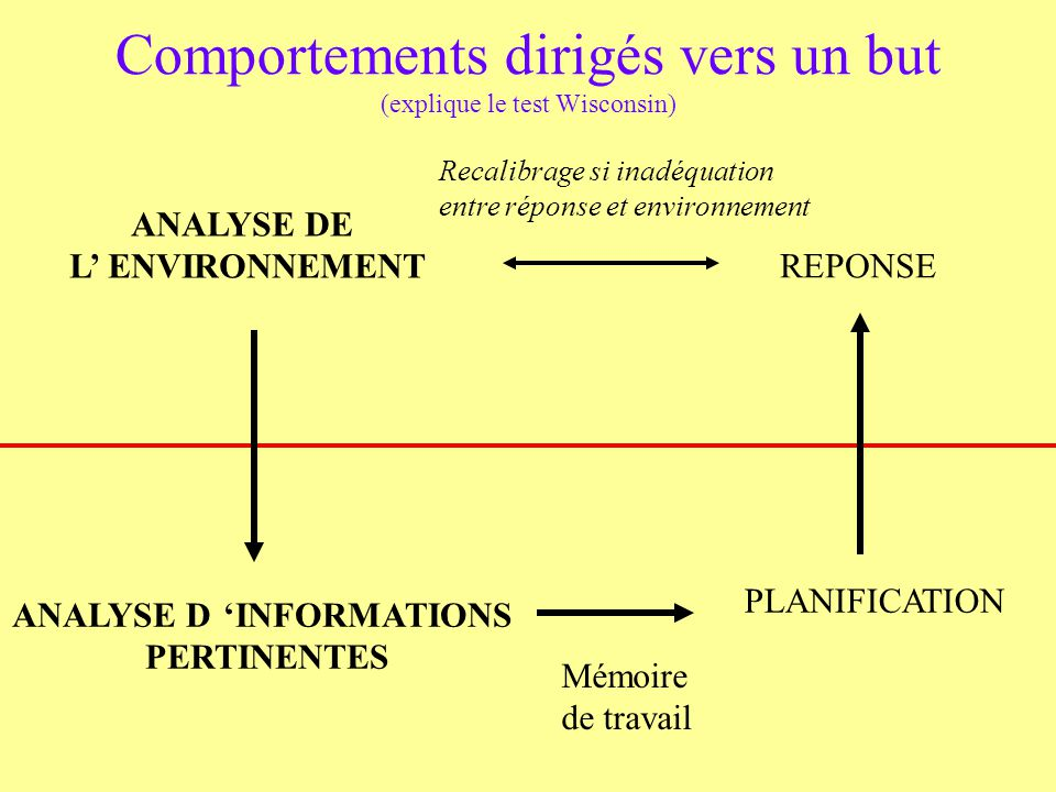 Comportements dirigés vers un but (explique le test Wisconsin)