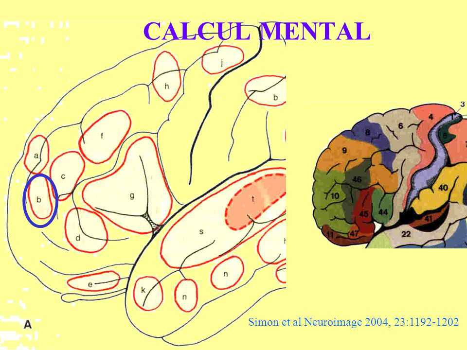CALCUL MENTAL Simon et al Neuroimage 2004, 23:1192-1202