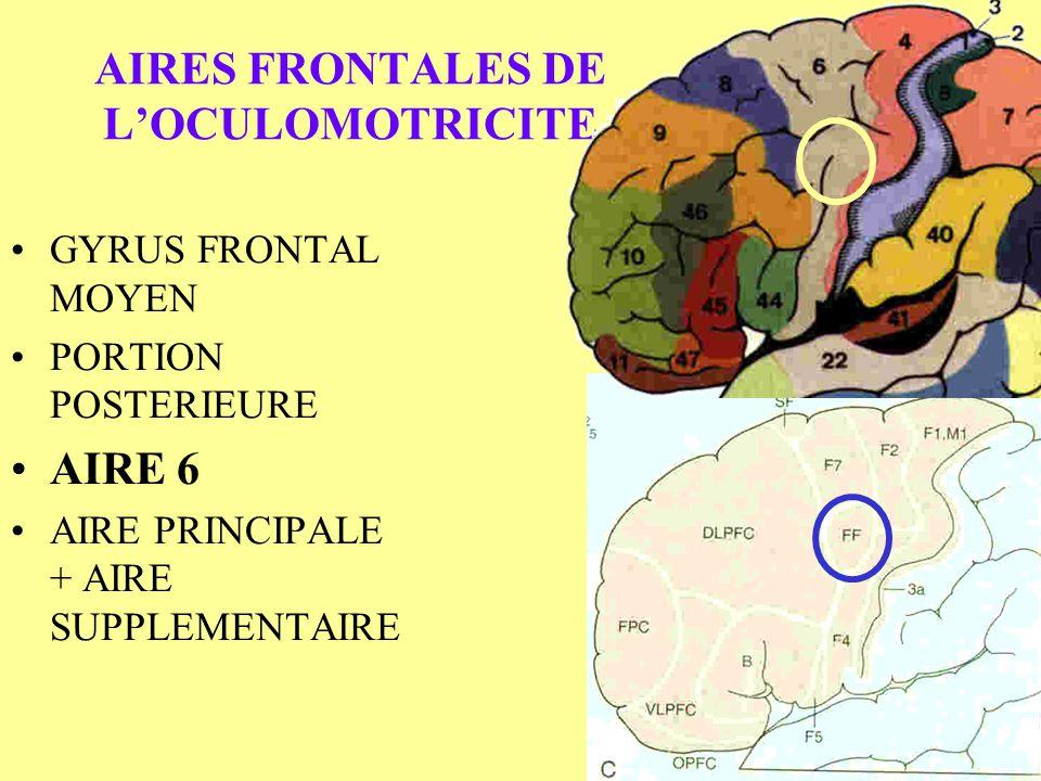 AIRES FRONTALES DE L'OCULOMOTRICITE