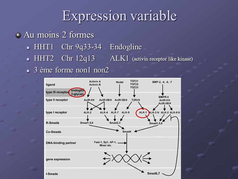 Expression variable Au moins 2 formes HHT1 Chr 9q33-34 Endogline