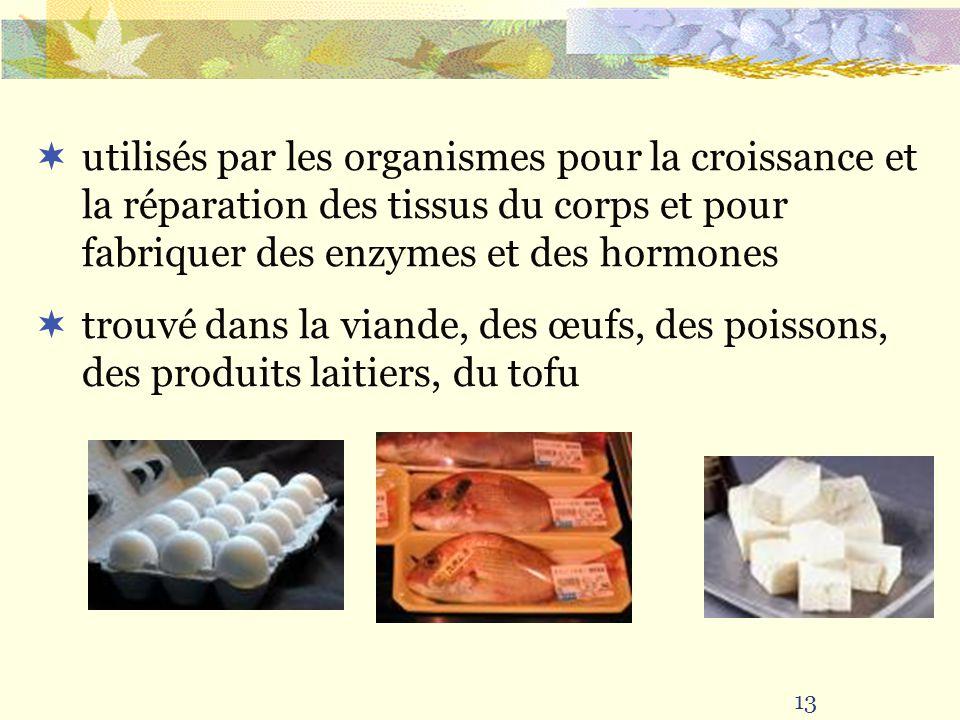 utilisés par les organismes pour la croissance et la réparation des tissus du corps et pour fabriquer des enzymes et des hormones