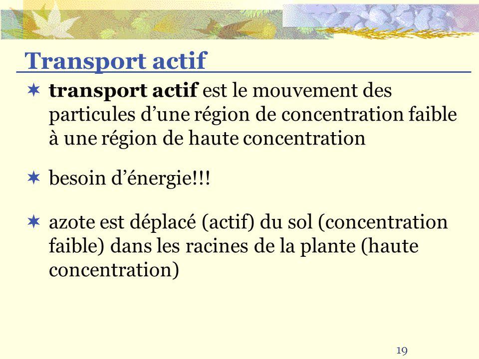 Transport actif transport actif est le mouvement des particules d'une région de concentration faible à une région de haute concentration.