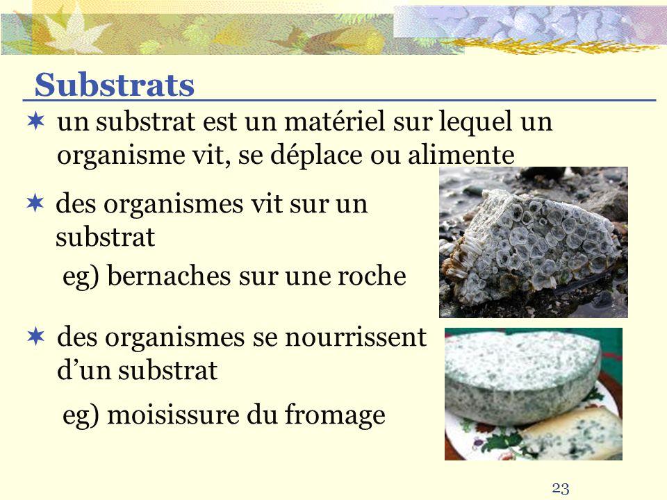 Substrats un substrat est un matériel sur lequel un organisme vit, se déplace ou alimente. des organismes vit sur un substrat.