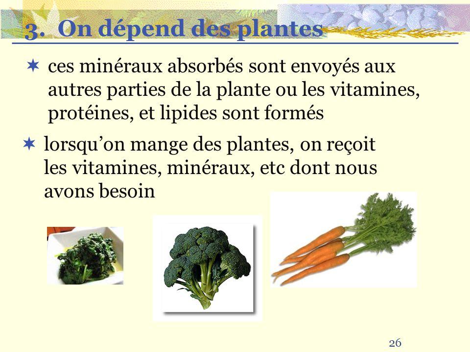 3. On dépend des plantes ces minéraux absorbés sont envoyés aux autres parties de la plante ou les vitamines, protéines, et lipides sont formés.