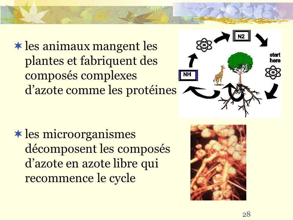 les animaux mangent les plantes et fabriquent des composés complexes d'azote comme les protéines