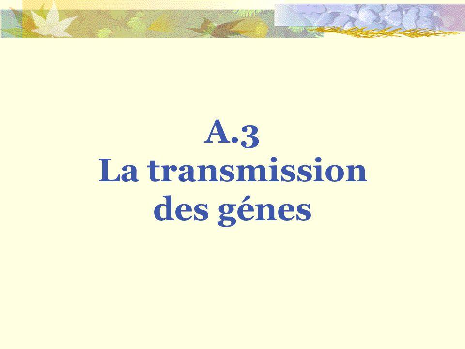 La transmission des génes