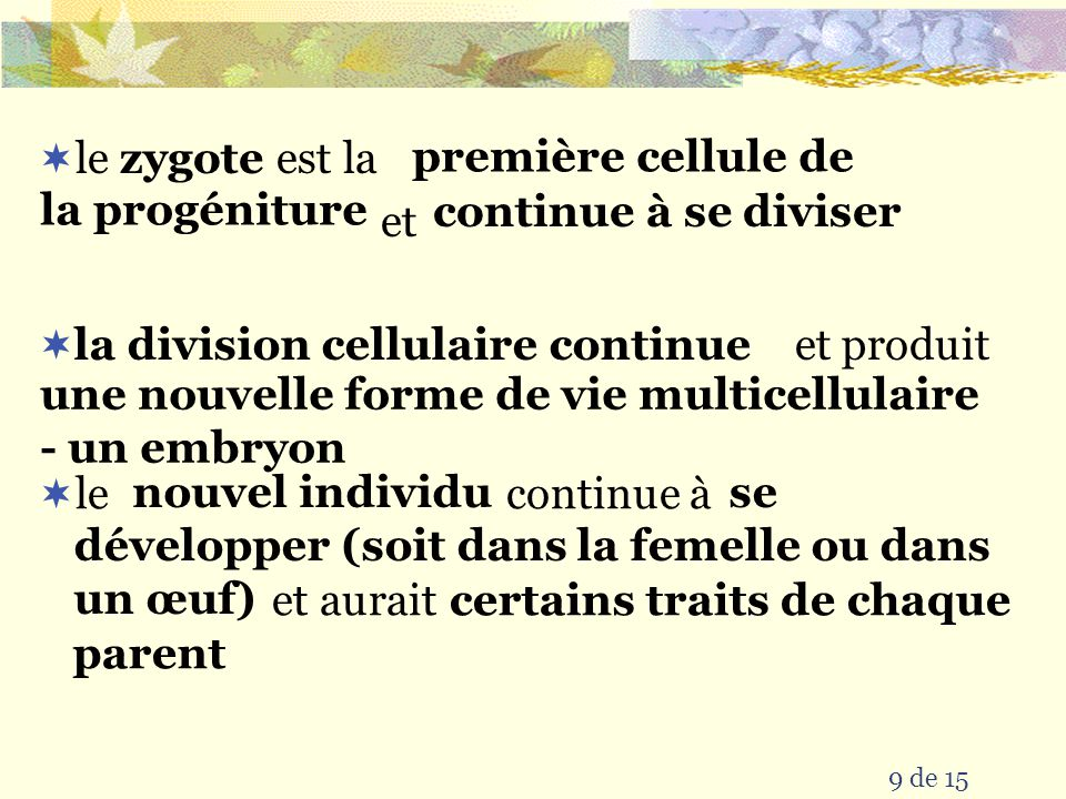 première cellule de la progéniture continue à se diviser