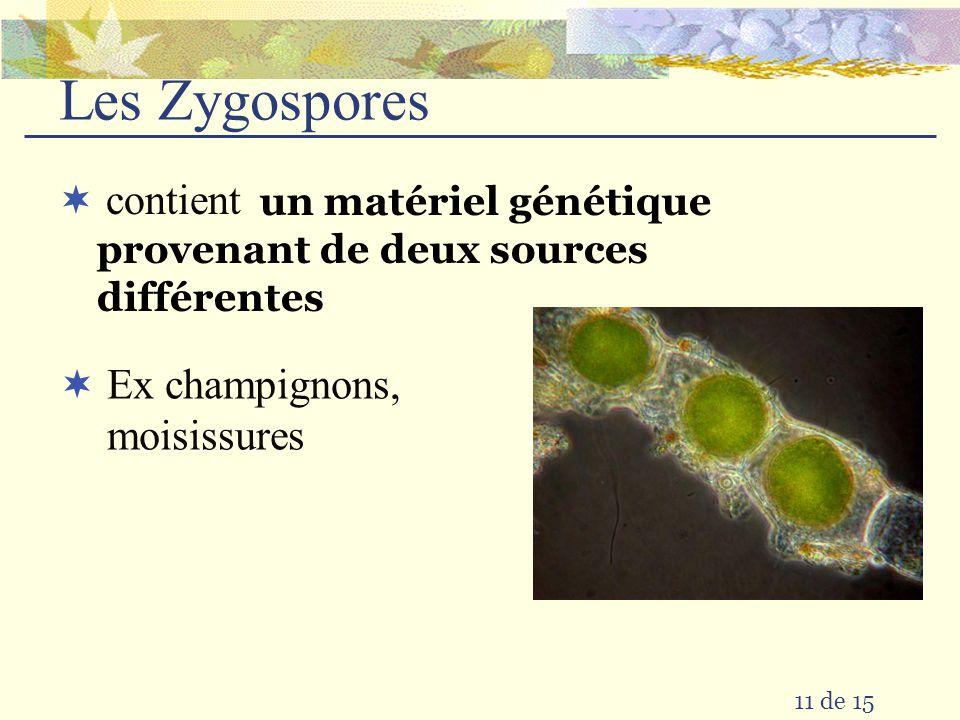 Les Zygospores contient Ex champignons, moisissures