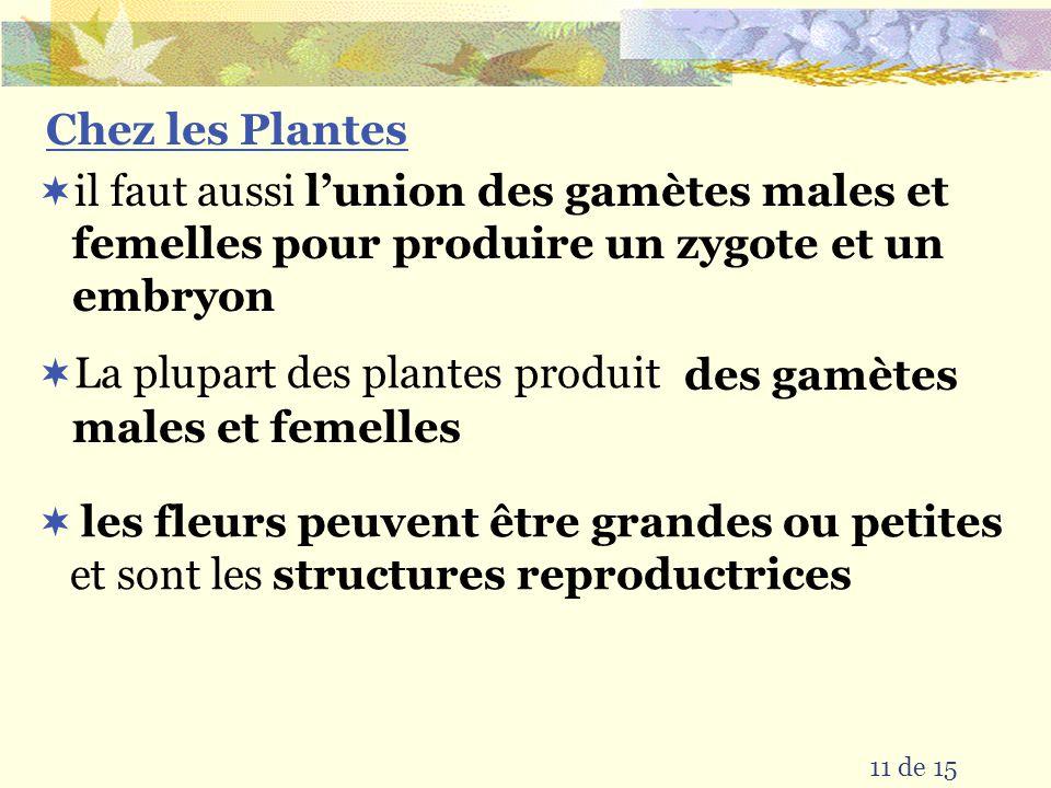 La plupart des plantes produit des gamètes males et femelles
