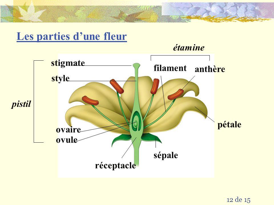 Les parties d'une fleur