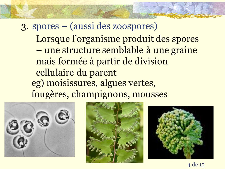 spores – (aussi des zoospores)