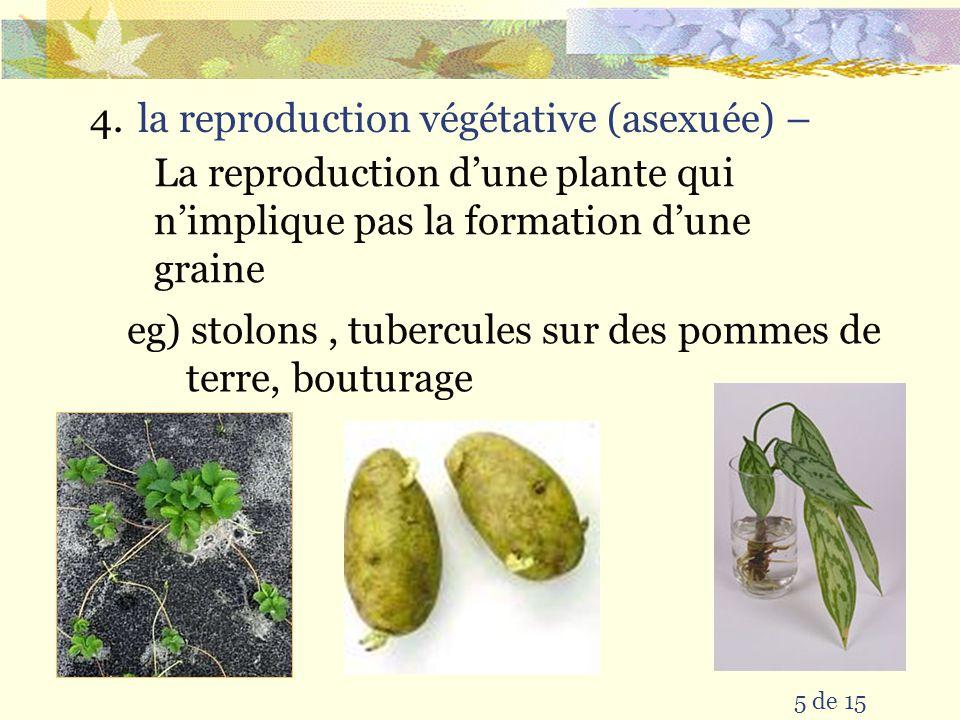 la reproduction végétative (asexuée) –