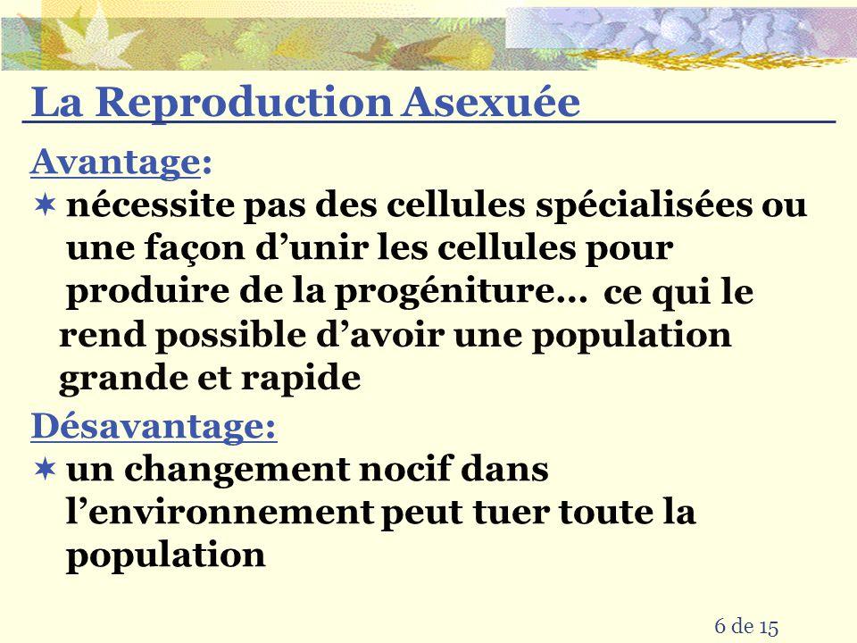 La Reproduction Asexuée
