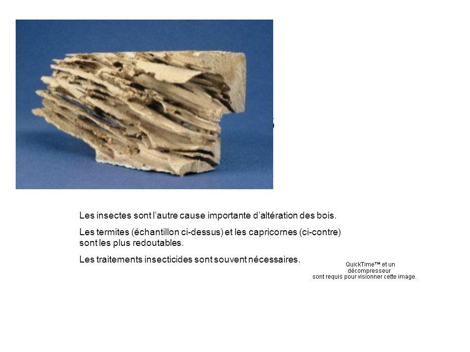 Termites Les insectes sont l'autre cause importante d'altération des bois.