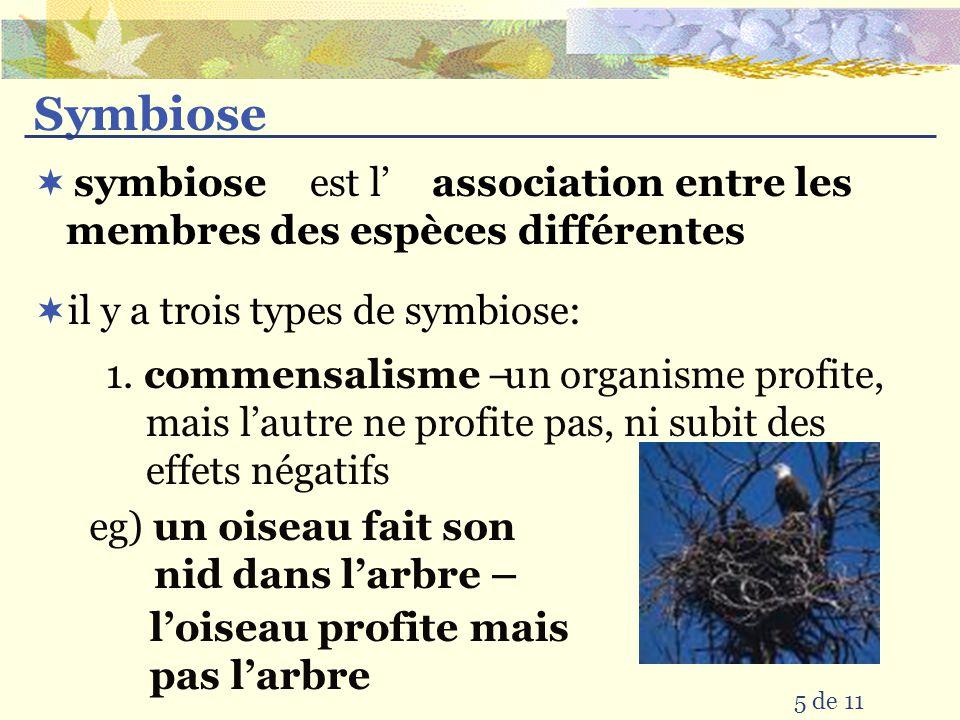 Symbiose est l' association entre les membres des espèces différentes